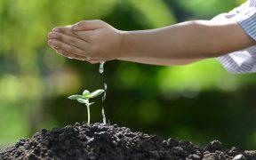 Złożone dłonie w których jest woda kapiąca na małą roślinę